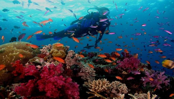 best diving spot in bali